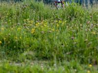 Blumenwiese an der Isar