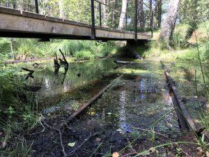 Brücke in den Kendlmühlfilzn